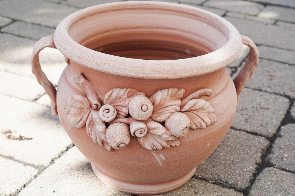 Terracotta pot for fiddle leaf fig