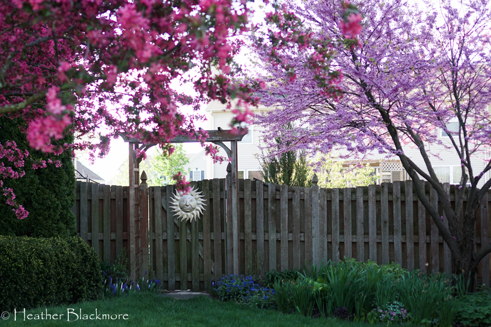 Redbud and crabapple trees
