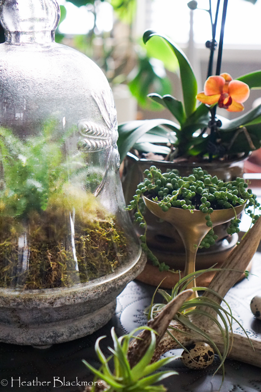 Fern under glass cloche with orchid