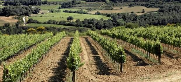 vinos-del-penedes