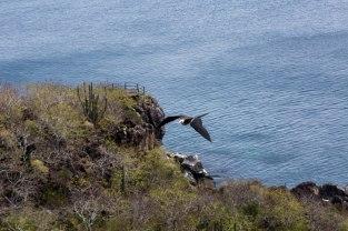 Galapagos_347
