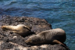 Galapagos_358