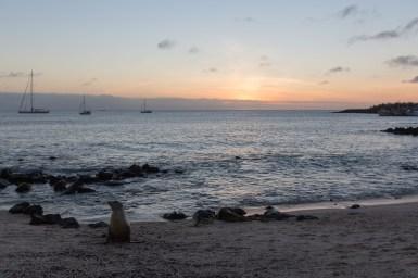 Galapagos_404