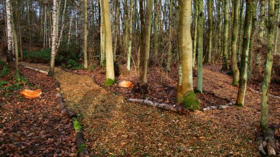 North Woodland walk