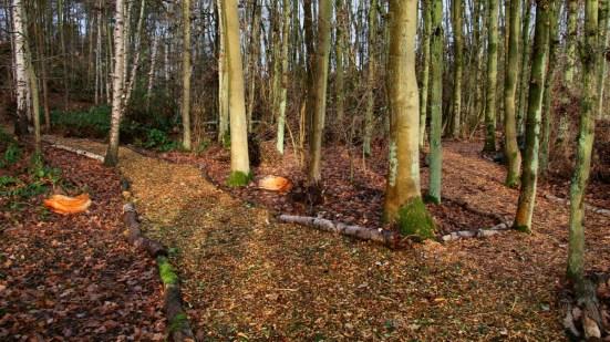 North Woodland walk