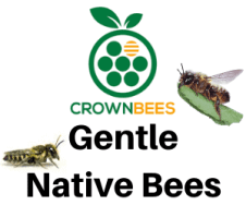 Episode #36: Native Bees ft. Crown Bees 1