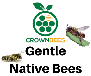 Crown Bees