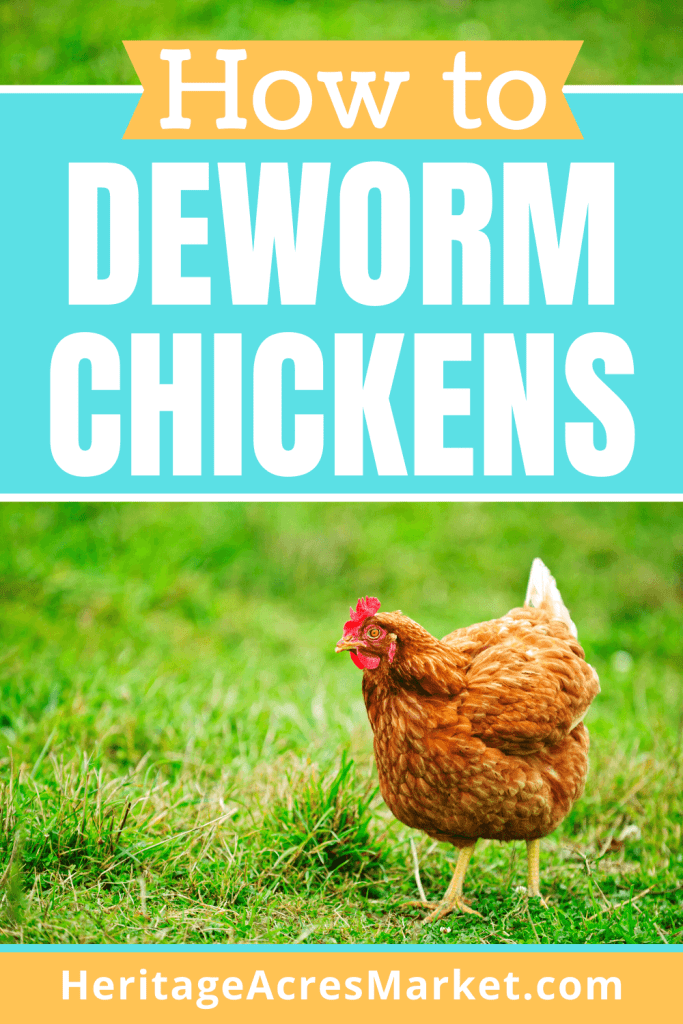 how to worm chickens