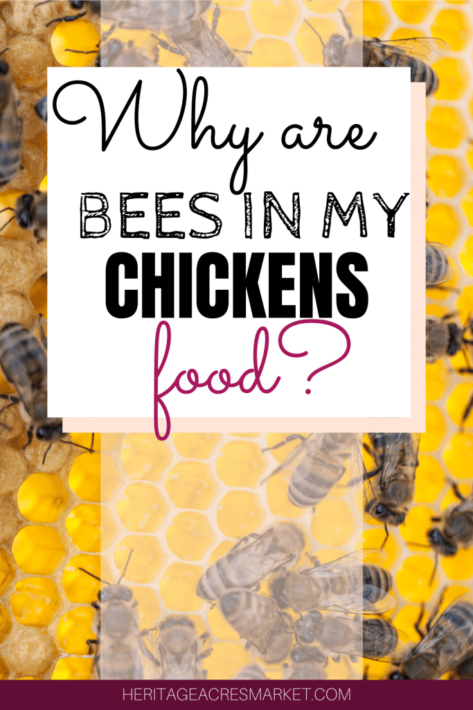 Bees in Chicken Food 2