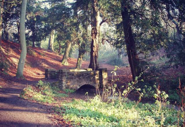 A view of the wooded valley at the Leasowes courtesy Dudley Council