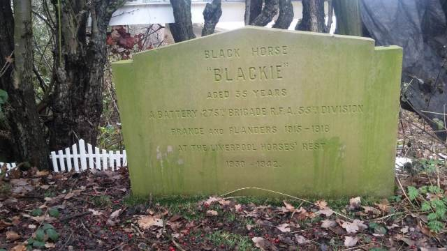 blog-blackie-the-war-horse-headstone-c-rspca