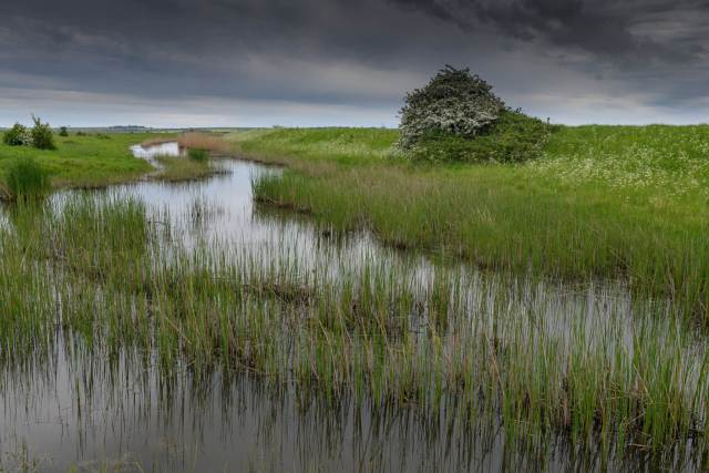 The Thames estuary marshes