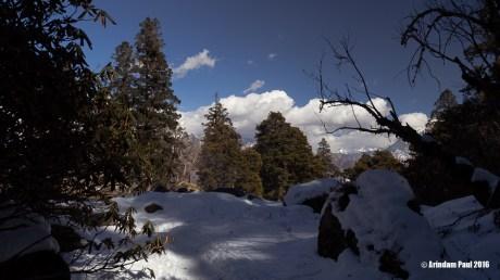 Kuari Pass - Uttarakhand