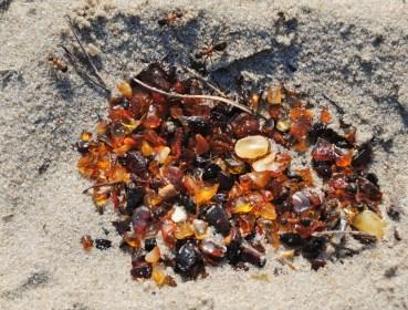 ant-nest