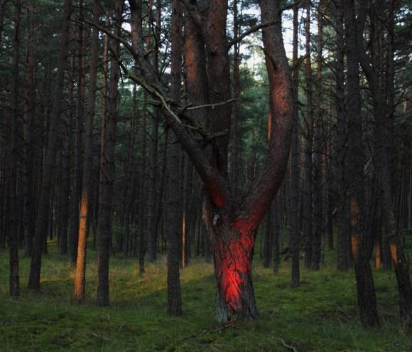 tree-glow-3