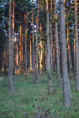 tree-glow