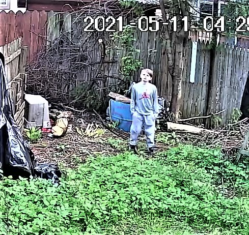 5/11/21 First sighting of Pickaxe Gang member, here seen trespassing in your battle-scarred yard
