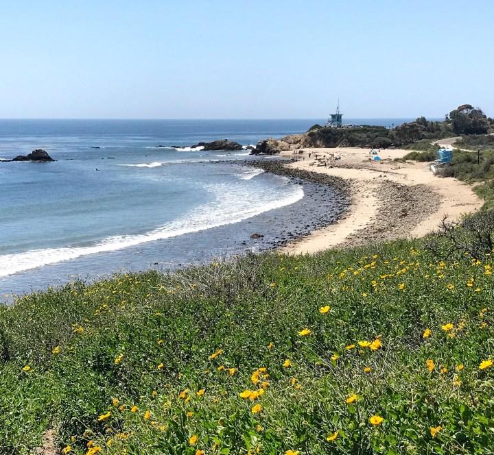 FLOWER FIELD IN CALIFORNIA ALONG HIGHWAY 1