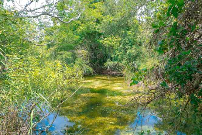 Gumbo Limbo Trail in Everglades National Park. Located in the state of Florida, this National Park Guide will tell you everything you need to know about your first visit   herlifeadventures.blog   #everglades #nationalpark #florida #travel #destinations