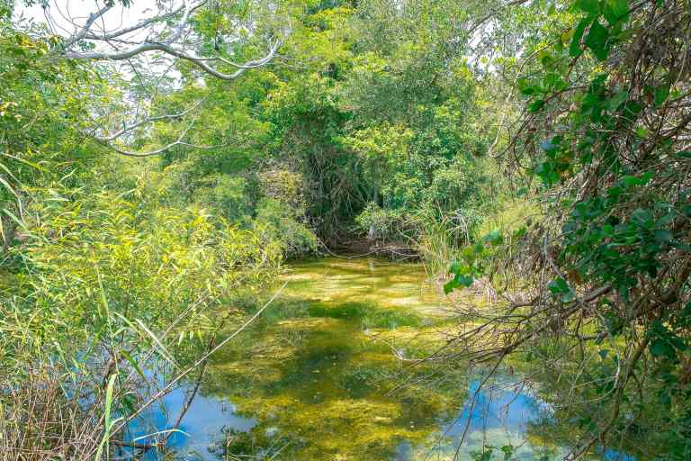 Gumbo Limbo Trail in Everglades National Park. Located in the state of Florida, this National Park Guide will tell you everything you need to know about your first visit | herlifeadventures.blog | #everglades #nationalpark #florida #travel #destinations