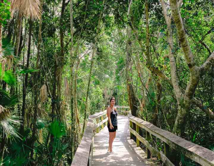 Mahogany Hammock Trail Everglades National Park. This National Park Guide will tell you everything you need to know about your first visit | herlifeadventures.blog | #everglades #nationalpark #florida #travel #destinations