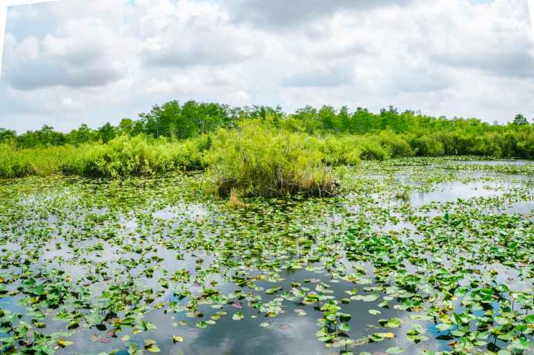 Hiking Anhinga trail in Everglades National Park is the best way to see wildlife! This National Park Guide will tell you where to hike, what to do + more! | herlifeadventures.blog | #everglades #nationalpark #florida #travel #destinations