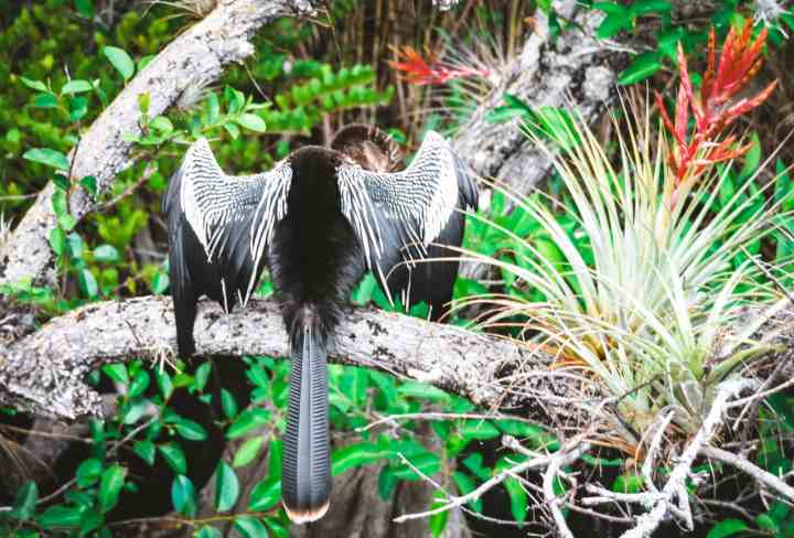 Bird watching in Everglades National Park is just one way to see wildlife! This National Park Guide will tell you where to hike, what to do + more! | herlifeadventures.blog | #everglades #nationalpark #florida #travel #destinations