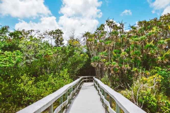 Mahogany Hammock Trail Everglades National Park. This National Park Guide will tell you everything you need to know about your first visit   herlifeadventures.blog   #everglades #nationalpark #florida #travel #destinations