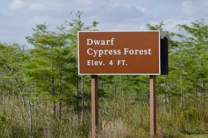 Dwarf Cypress Forest 4 ft elevation sign in Everglades National Park | herlifeadventures.blog | #everglades #nationalpark #florida #travel #destinations