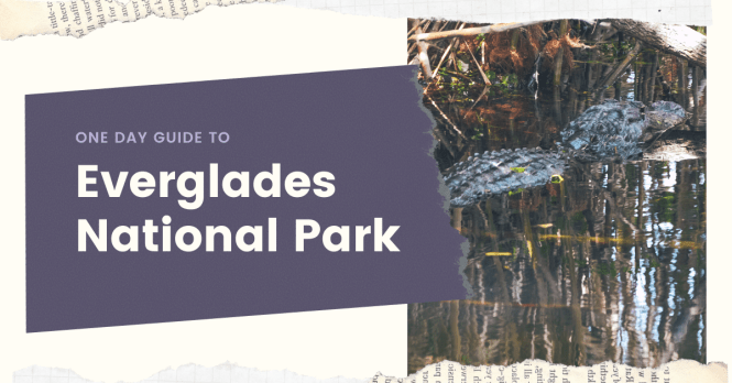 This Adventure Guide to Everglades National Park will explore the diverse eco systems while hiking through the various landscapes of the park. #everglades #nationalpark #adventure #guide #itinerary #thingstodo #hike