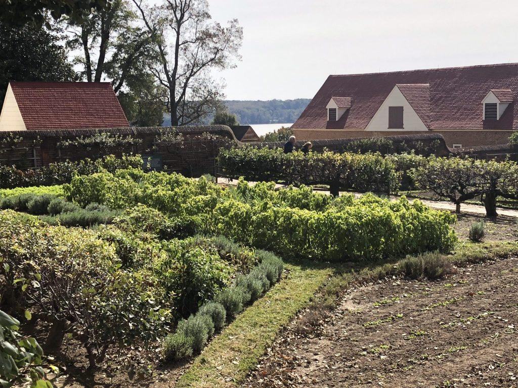 Her Life in Ruins | The Kitchen Garden at Mount Vernon