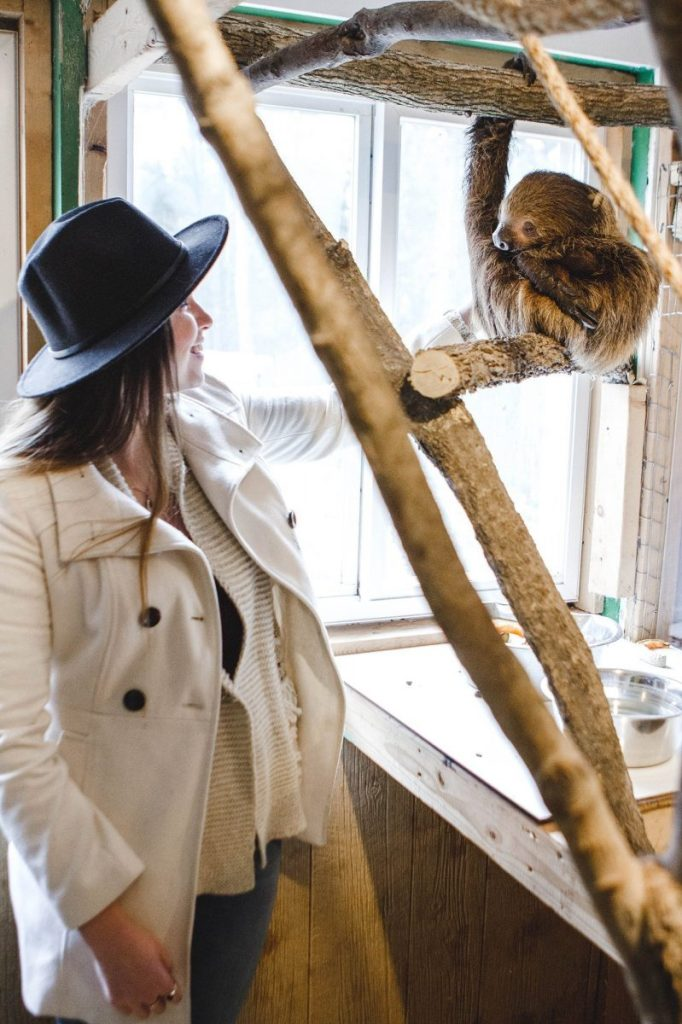 Her Life in Ruins | An Adventure at Kentucky Down Under - Petting Molasses the Two-Toed Sloth