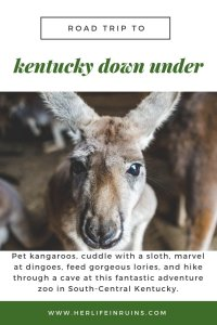 Her Life in Ruins   An Adventure at Kentucky Down Under