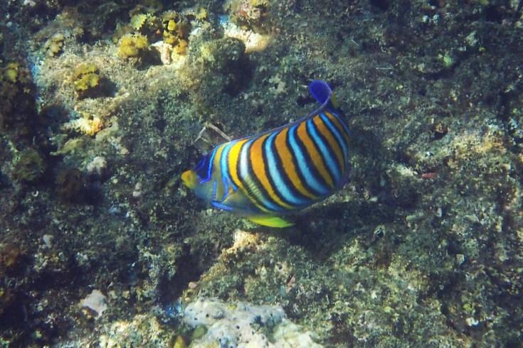 Snorkeling in Menjangan Island Bali 12