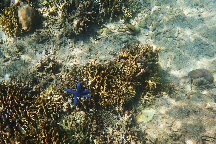 Snorkeling in Menjangan Island Bali 7