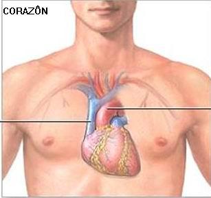 hermandadblanca.org corazon Los 5 órganos y su función psicológica terapias alternativas rincon salud organos corazón description multimedia