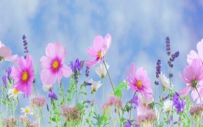 Snart är våren här med ny energi