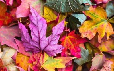Hösten är perfekt för att släppa det gamla