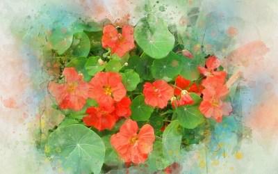 En blomma i maten piggar upp