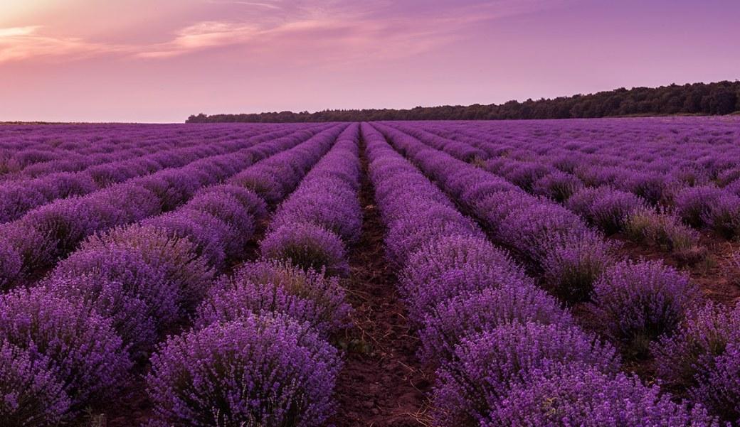 violet et bijoux fantaisies