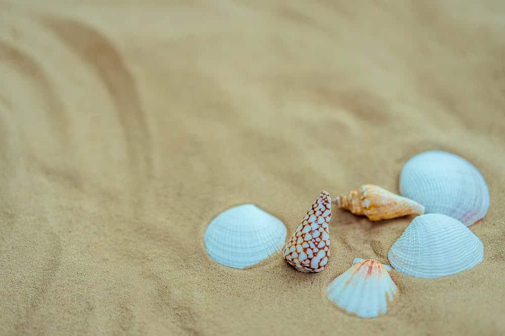 faire ses bijoux en coquillages
