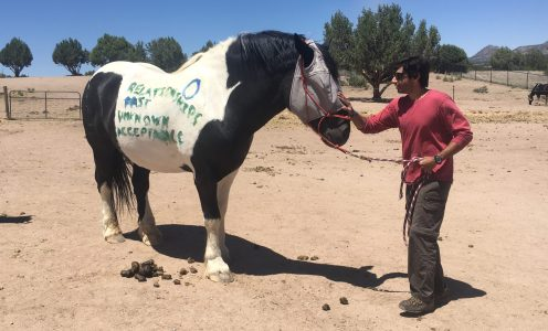 Why horses?: Strengthening and developing healthy relationships (Part 3 of 4)