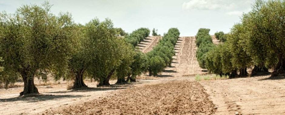 Olivar archivos herogra fertilizantes s a for Desde cuando hay clausula suelo