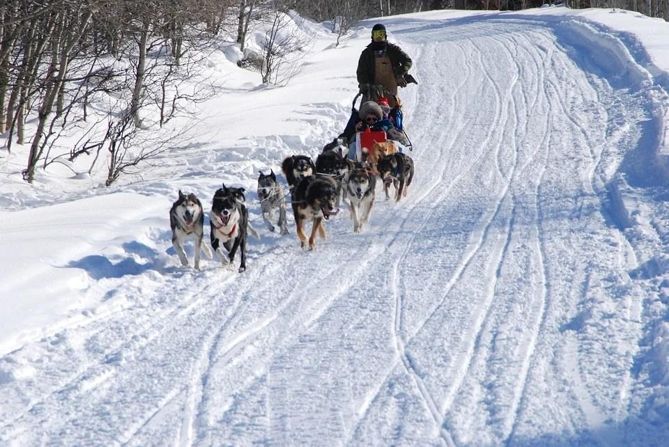 Balade en chiens de traîneau cet hiver