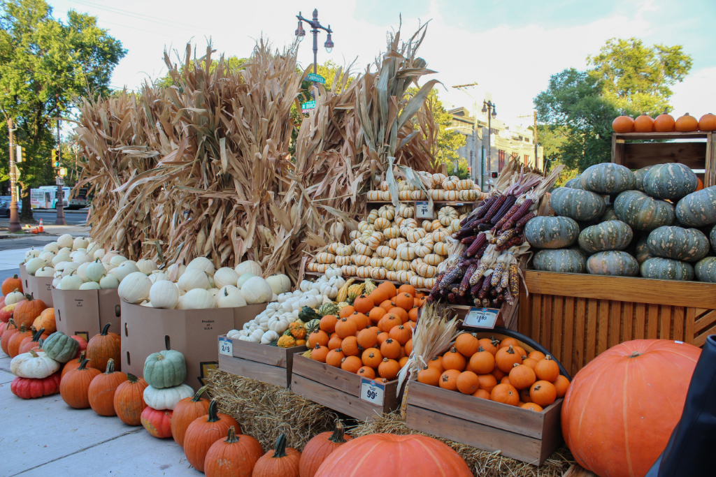 Where to buy pumpkins in Philly