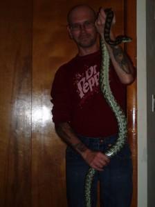 Carpet Python Morelia sp.