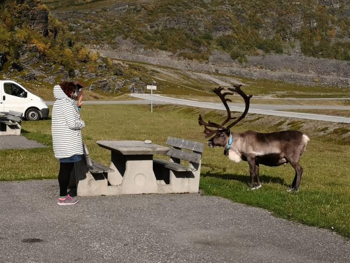 Tini Auge in Auge mit einem Rentier in der Nähe des Nordkaps