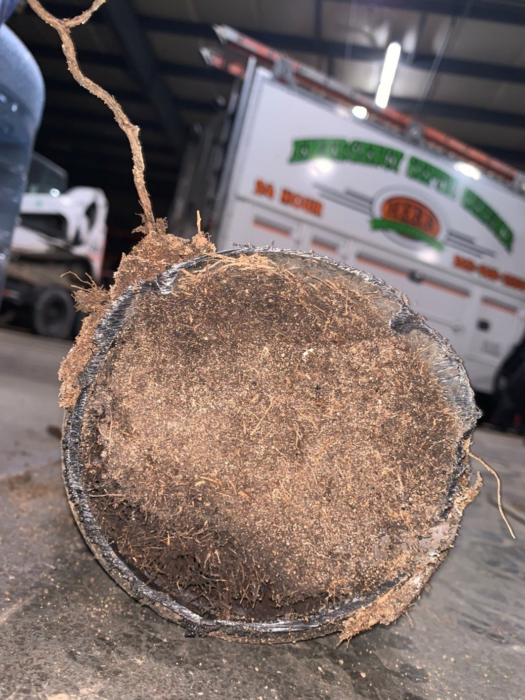 Repairing Sewer because of Root Mass