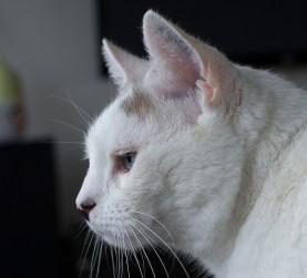 En mustaschkatt att räkna med