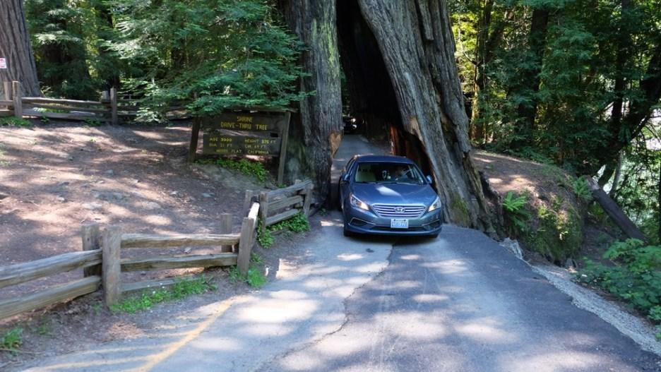Mit dem Auto durch den Baum... ©HerrundFrauBayer